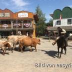 Die Longhorns